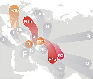Human Y-chromosome DNA haplogroup - The hypothetical divergence of Haplogroup R and its descendants.
