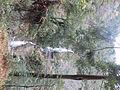 Harafudou Falls No,02.JPG