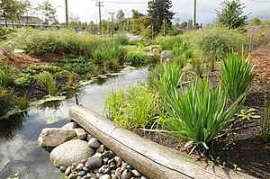 Daylighting (streams) - Hastings Creek Restored at Creekway Park.  Vancouver, B.C.