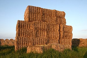 SEO for Small Businesses - How To Not Be A Needle In A Haystack