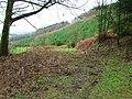 Henley Wood - geograph.org.uk - 685464.jpg