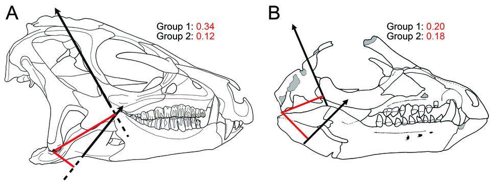 Heterodontosaurus and Tianyulong