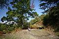 Hills forest (3338554170).jpg