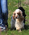 HiperParada animalelor la CORA (4549111298).jpg
