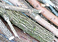 Holz P1200828.jpg