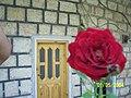 Home @ syria - panoramio.jpg