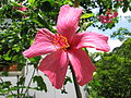 Hongkong Blume02.JPG