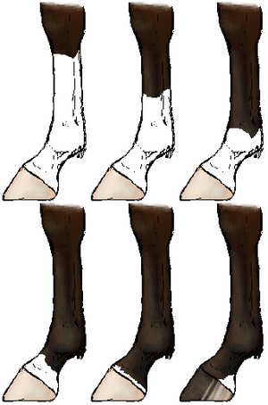 Horsemarkings legs.png