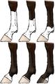 Horsemarkings legs.png