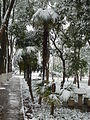 Huazhong University of Science and Technology - snow - P1050012.JPG