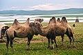 Hulunbuir Grasslands, Inner Mongolia - 9758628436.jpg