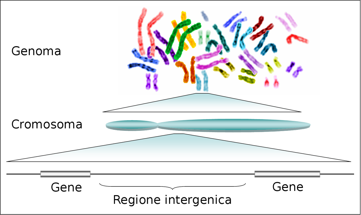 Das Genom