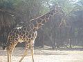 Hyd zoo 3.jpg