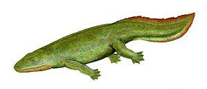 Hynerpeton bassetti, a basal tetrapoda from th...