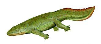 Tetrapod - Hynerpeton