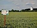 Ihinger Hof, Saatgut-Vermehrung, Wnterweichweizen Pamier - panoramio.jpg