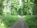 Im Wald nahe der Römerstraße - panoramio (2).jpg