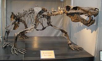 Therapsid - Mounted skeleton of Inostrancevia alexandri, a gorgonopsian therapsid