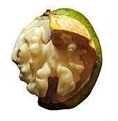 Walnut - Wikipedia