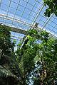 Inside the greenhouse @ Parc Zoologique de Paris (Zoo) @ Paris (25741075944).jpg