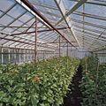 Interieur bloemenkas - Aalsmeer - 20404731 - RCE.jpg