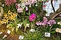 Internationale Orchideen- und Tillandsienschau Blumengärten Hirschstetten 2016 b.jpg