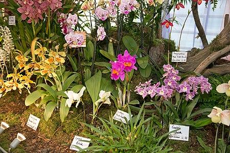 Различные декоративные орхидеи