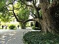 Isola Bella (Stresa) - Garden - DSC03437.JPG