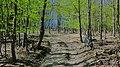 JAR V LESE - panoramio.jpg