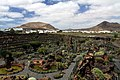 Jardin de Cactus on Lanzarote, June 2013 (2).jpg