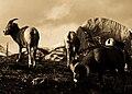 Jasper Wildlife.jpg