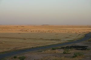 Upper Mesopotamia - Typical view of farmland in the area north of Al-Hasakah, with an ancient tell visible on the horizon