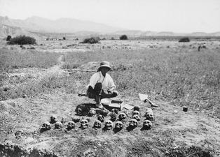 John Lindros med skallarna från grav 8. Ajios Jakovos. kranium - SMVK - C01444.tif