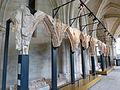 Jubé de la cathédrale de Bourges (1).jpg