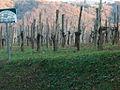 Jurançon 11 12 2010 041.jpg