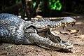 Kachikally-crocodile-pool-manify.jpg