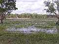 Kakadu, 2004 - panoramio.jpg