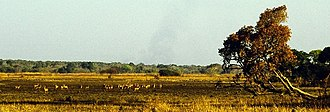 Kasanka National Park - View of wildlife in the park