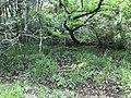 Kasuya Research Forest of Kyushu University 20.jpg