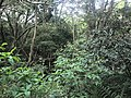 Kasuya Research Forest of Kyushu University 3.jpg