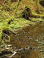Kavinský potok (14).jpg