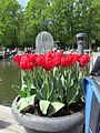 Keukenhof Garden (1).JPG