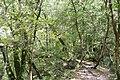 Khostinskiy, Krasnodarskiy kray, Russia - panoramio (40).jpg