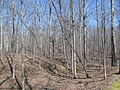Kings Mountain National Military Park - South Carolina (8558891710) (2).jpg