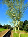 Kirstenbosch National Botanical Garden by ArmAg (18).jpg