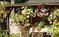 Knollenbegonien (Begonia × tuberhybrida) (9856366926).jpg