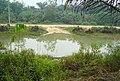Kolam ikan tradisional (17).JPG