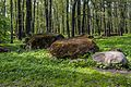Koplipargi kivi. 67.jpg