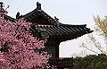 Korea Palace Spring Flowers 10.jpg