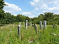 Koronowo - cmentarz ludności żydowskiej - panoramio (8).jpg